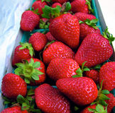 Deliciousness. Fresh California Strawberries off the farm Stock Photos
