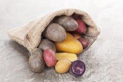 Delicous potatoes. Royalty Free Stock Photos