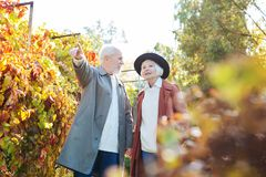 Delighted elderly man pointing with his hand stock image