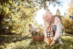 Delighted elderly people searching for mushrooms together royalty free stock photo
