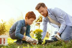 Delighted nice boy helping his father. Pleasant collaboration. Delighted nice boy helping his father while working in the garden Royalty Free Stock Images