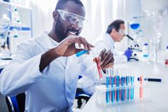 Delighted nice man holding test tubes. Medical testing. Delighted nice professional scientist holding test tubes and working with them while doing medical Royalty Free Stock Image