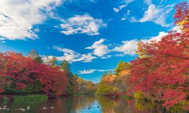 Pond in a delightful autumn. Stock Photos