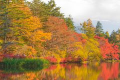 Pond in a delightful autumn. Royalty Free Stock Images