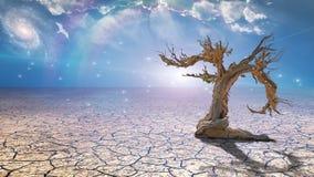 Delightful desert scene Royalty Free Stock Image