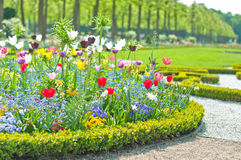 Delightful flower bed in the summer park Royalty Free Stock Image