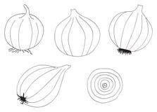 Delightful garden - Set of five onions. Set of five onions on white in the Delightful garden collection Stock Photo