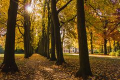 Delightful landscape of autumn park with alley, trees in perspective, fall of the leaf, ray of sun, sunshine. Seasonal background. The autumn alley is strewn stock photos