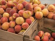 Delightful Peaches. This is a shot of some crates of fresh peaches stock photo