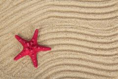 Delightful starfishes on sand Stock Photos