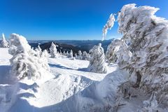Winter landscape of a Christmas tree in the snow. snow-white beauty. Delightful winter landscape of a Christmas tree in the snow. snow-white beauty Stock Photo