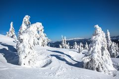 Winter landscape of a Christmas tree in the snow. snow-white beauty. Delightful winter landscape of a Christmas tree in the snow. snow-white beauty Stock Image