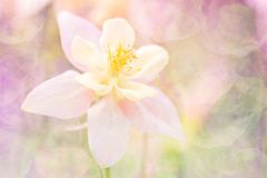 Delikat abstrakt blomma med en textur En blomma i en varm rosa tonalitet Slapp selektiv fokus stilfull bakgrund Royaltyfria Foton