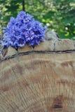 Delikat blått blommar i skogen arkivbild
