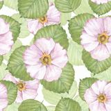 Delikat blom- sömlös modell med vita blommor 2 Royaltyfri Bild