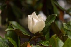 Delikat botanisk trädgårdBalcic Bulgarien - som är enkel och fotografering för bildbyråer