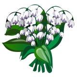 Delikat bukett av vita klockablommor Royaltyfri Bild
