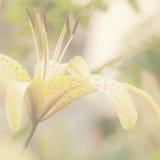 Delikat gul blom- bakgrund Royaltyfri Foto