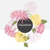 Delikat krysantemumblomma för illustration vektor illustrationer