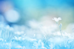 Delikat liten vit blomma på en härlig bakgrund med en försiktig signal Färgrik blom- bakgrund Royaltyfri Foto