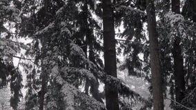 Delikat snö som faller på djup skog i västra washington stock video