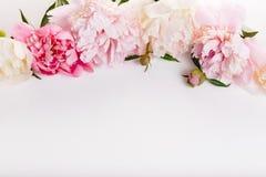 Delikat vit rosa pion med kronbladblommor och vitt band på vit Över huvudet bästa sikt, lekmanna- lägenhet kopiera avstånd Födels arkivfoton