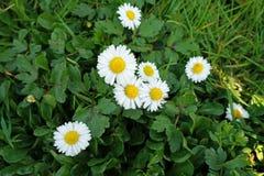 Delikata blommor i gräsplan Arkivbilder