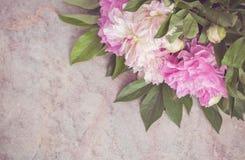 Delikata rosa och vita pioner ligger på en marmortabell Royaltyfri Fotografi
