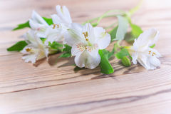 Delikata vita blommor i det varma solskenet Royaltyfria Foton