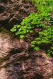delikatna gałąź i ogromna skała Obrazy Royalty Free