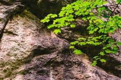 delikatna gałąź i ogromna skała Obrazy Stock