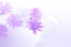 Delikatna purpura kwitnie w białej filiżance Powiewny i miękki spojrzenie miękkie ogniska, zdjęcia stock