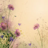 Delikatnego koloru kwiecisty tło Fotografia Royalty Free
