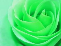 Delikatnej rosebud mennicy różany zbliżenie Obraz Stock