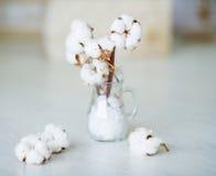 Delikatni biali bawełna kwiaty zdjęcie royalty free