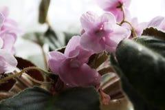 Delikatni makro- kwiaty obraz royalty free