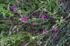 Delikatni wildflowers na tle greenery zdjęcie royalty free