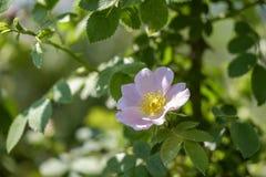 Delikatni wiosna kwiaty 2 zdjęcie stock