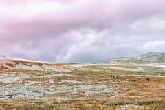 Delikatnie połodzy wzgórza i pastelowi kolory Zdjęcie Stock