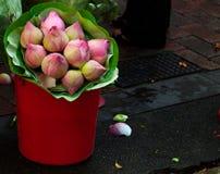 Delikatnie zaświecający lotosowego kwiatu pączki w czerwonym wiadrze fotografia royalty free
