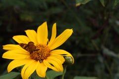 DELIKATNOŚĆ kwiaty Zdjęcia Royalty Free