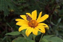 DELIKATNOŚĆ kwiaty Fotografia Stock