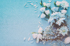 delikatny błękitny kwiatu przygotowania na drewnianym tle kosmos kopii Obraz Royalty Free