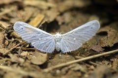 Delikatny biały motyl na lasowej podłoga Obraz Stock