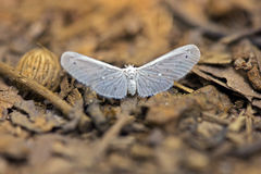 Delikatny biały motyl na lasowej podłoga Zdjęcia Stock