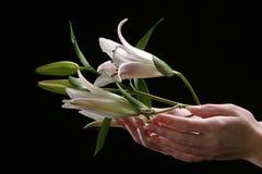 Delikatny białej lelui kwiat Zdjęcia Stock