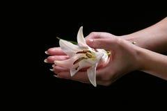 Delikatny białej lelui kwiat Zdjęcia Royalty Free
