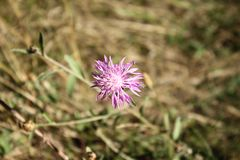 delikatny kwiat Zdjęcie Royalty Free