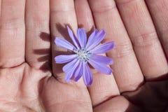 delikatny kwiat obraz royalty free