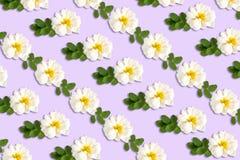 Delikatny pastelowy lily tło z białymi różami Fotografia Stock